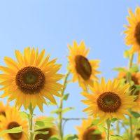 「夏休み短縮!中学受験の夏期講習に参加させるべき?小川大介先生が示す3つの対応策」記事サムネイル
